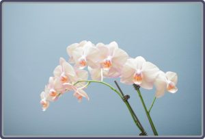 vt-flower